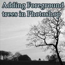 adding foreground trees in photoshop